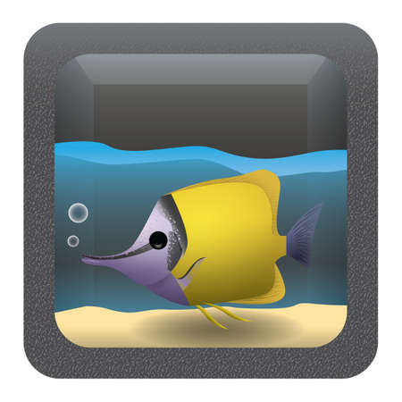 butterflyfish: forceps butterflyfish in an aquarium Illustration