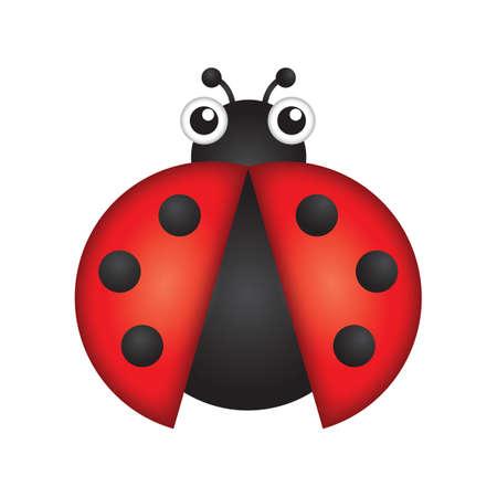 lady beetle: ladybug Illustration