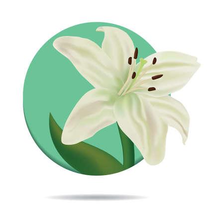 stamens: lily