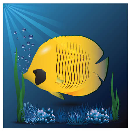 yellow butterfly: yellow butterfly fish in an aquarium Illustration