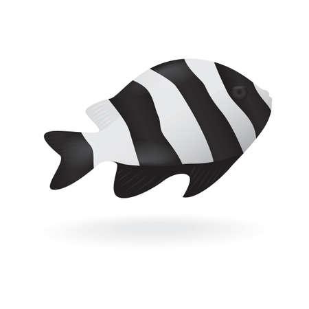 humbug: humbug damselfish