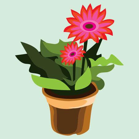 plant pot: gerbera flower plant in pot