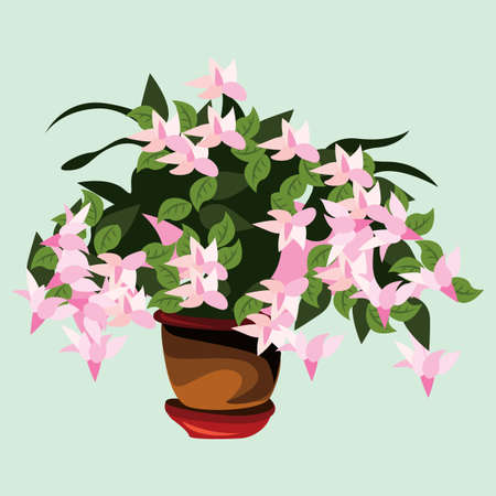 lilly: flower plant in pot