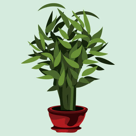 plant pot: decorative plant pot
