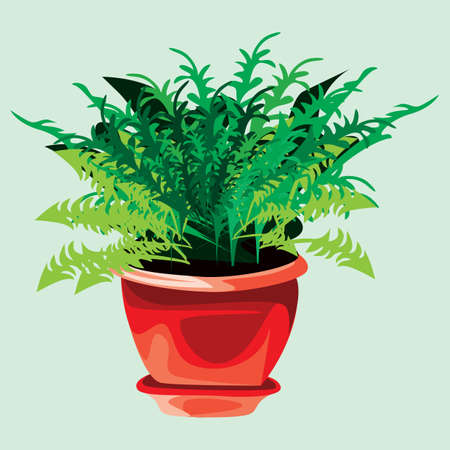 plant pot: green plant in pot