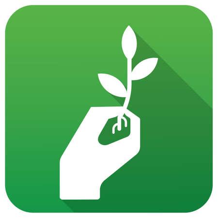 sapling: hand holding sapling