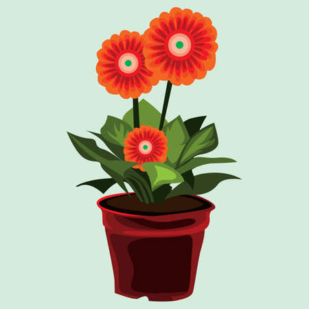 plant pot: gerbera flower plant in pot
