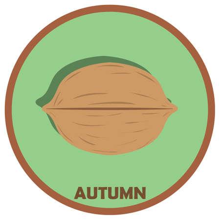 nuts: wall nut