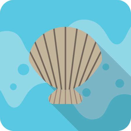 scallops: scallops shell