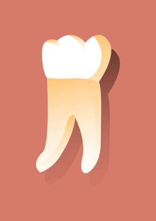 molar: molar tooth