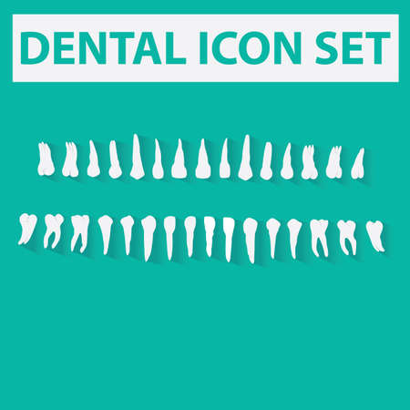 premolar: dental icons