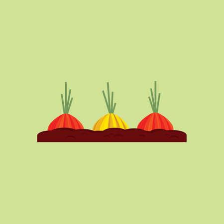 fertile: onion seedling on fertile soil