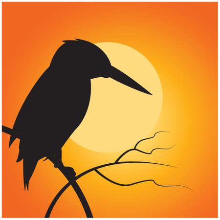 kingfisher: silhouette of kingfisher
