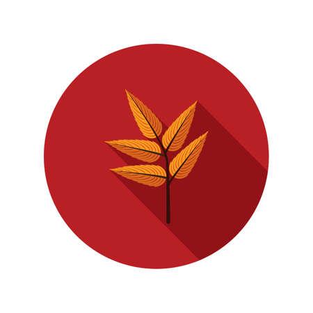 leaf: rowan leaf