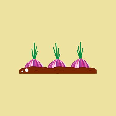 onion seedling on fertile soil
