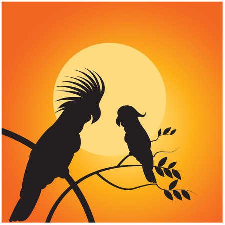cockatoo: silhouette of cockatoo