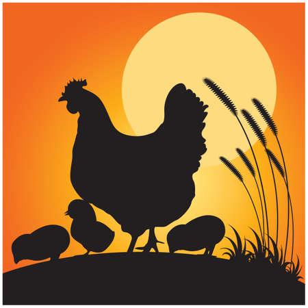 pollitos: silueta de gallina y los pollitos Vectores