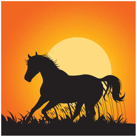 horse running: silhouette of horse running