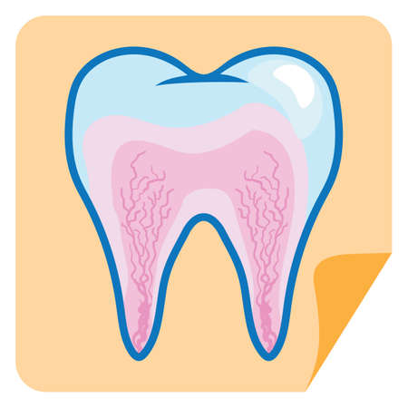 root canal: root canal in a tooth
