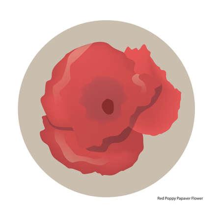 red poppy: red poppy papaver flower Illustration