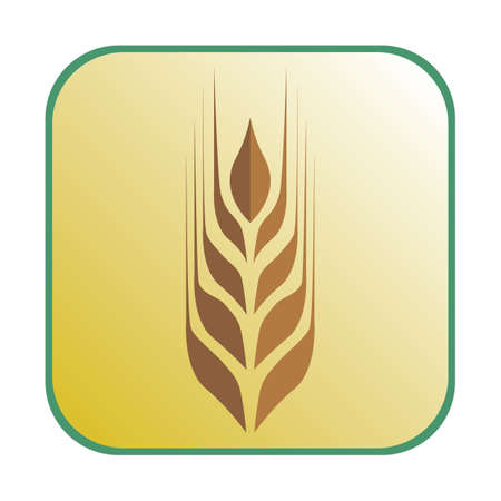 grain fields: ear of wheat Illustration