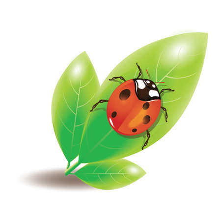 lady bug: lady bug on leaf
