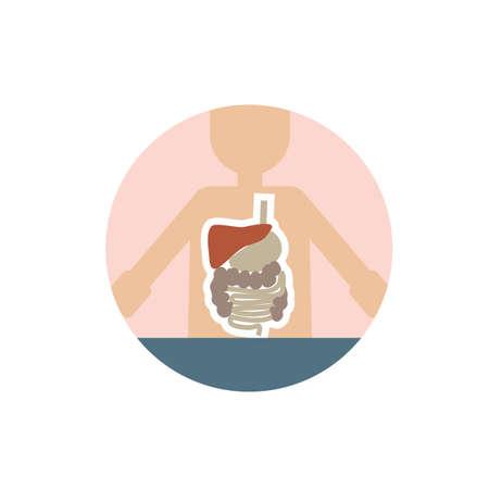 digestive: human digestive system Illustration
