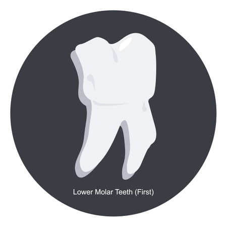 lower: lower first molar tooth