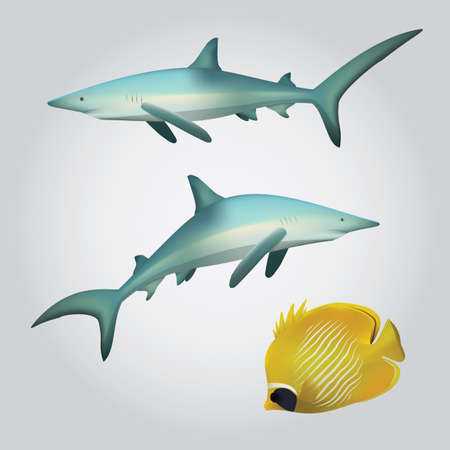 copperband: sharks and copperband fish
