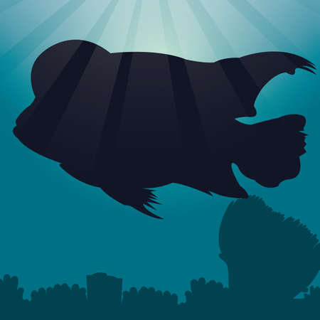 hump: flowerhorn silhouette