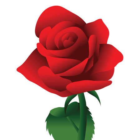 rose: rose flower Illustration