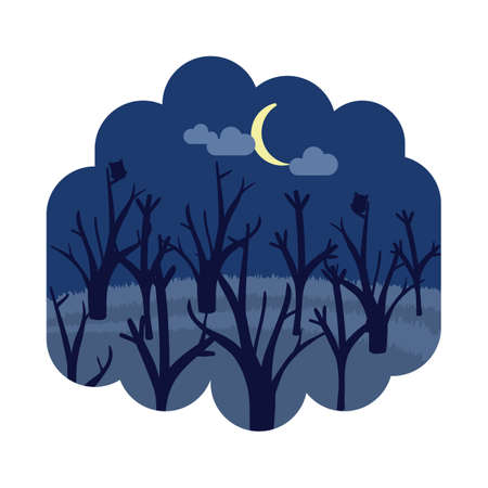 night: forest at night