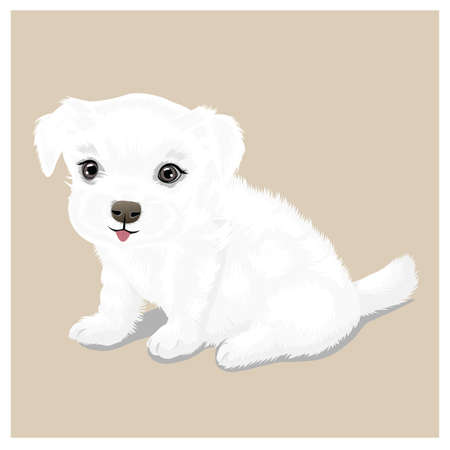 cute: cute puppy
