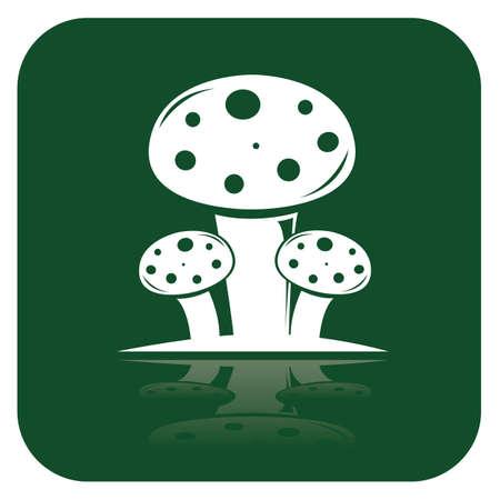 button mushroom: mushrooms Illustration