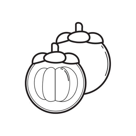 mangosteen mangosteen illustration