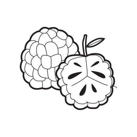Custard Apple Images For Drawing