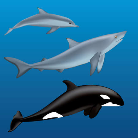 killer whale: dolphin, sharks and a killer whale Illustration