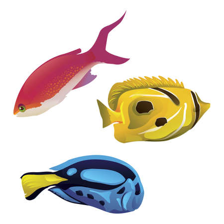 fishes: fishes collection