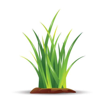 soils: grass