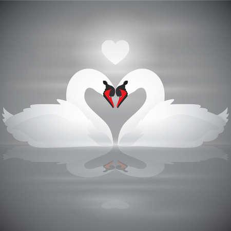 swans: swans in love