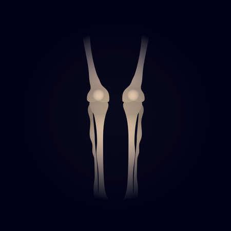 human leg: human leg bone