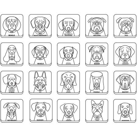 golden retriever puppy: set of dogs Illustration