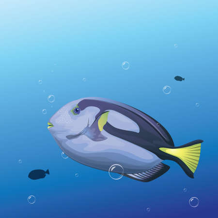 tang: blue tang fish Illustration