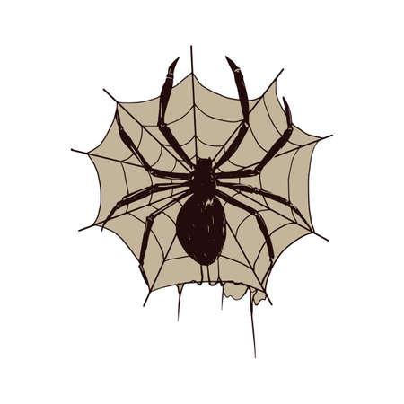 web: spider on the web Illustration
