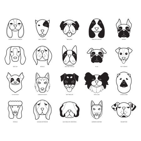 boston terrier: set of dogs Illustration
