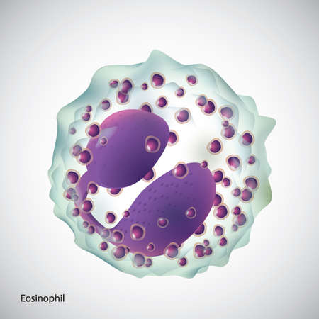 cytoplasm: eosinophil Illustration