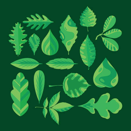 collection of various leaves Illustration