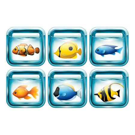 set of fishes in aquariums