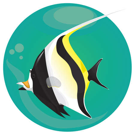 A moorish idol fish illustration. Illustration