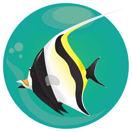 Une illustration de poisson idole maure. Banque d'images - 81470115
